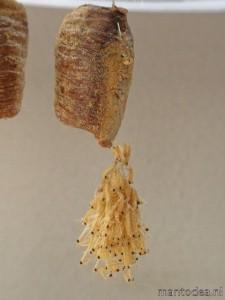uitkomst-eitjes